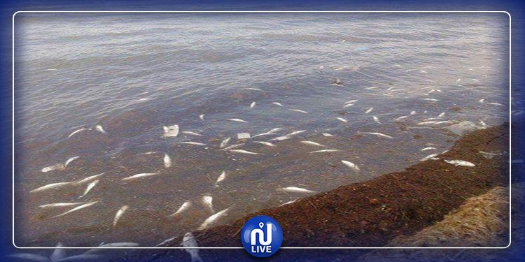 المنستير: الكشف عن أسباب نفوق كميات من الأسماك